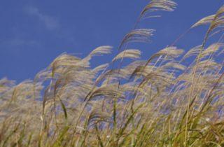 natuurinclusieve landbouw