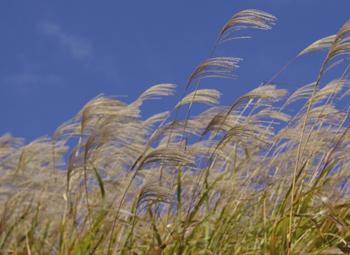 Grondfonds voor natuurinclusieve landbouw